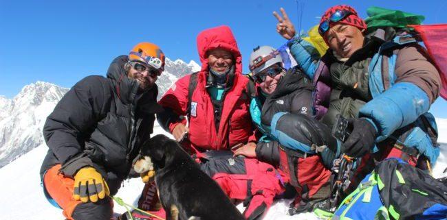 Mera, le chien qui a grimpé un sommet de l'himalaya