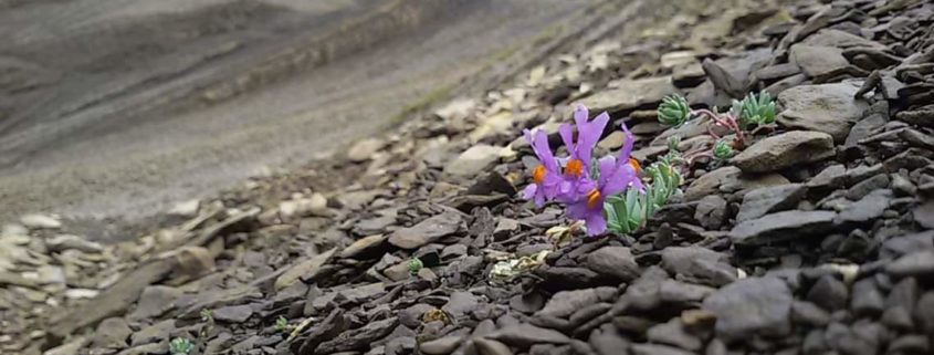 fleur haut giffre