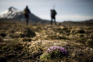 Flore du Groenland Watse