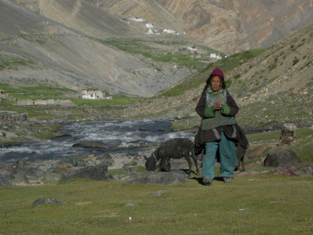 Eleveur à Photoksar, Zanskar