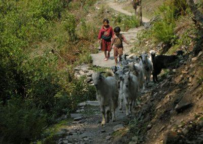 enfants et chèvres nepal