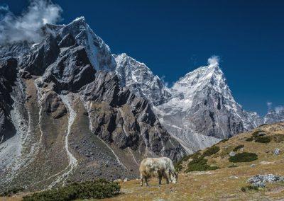 Haute vallée du Khumbu