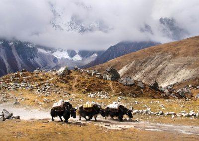 Sur les sentiers du Langtang, Népal